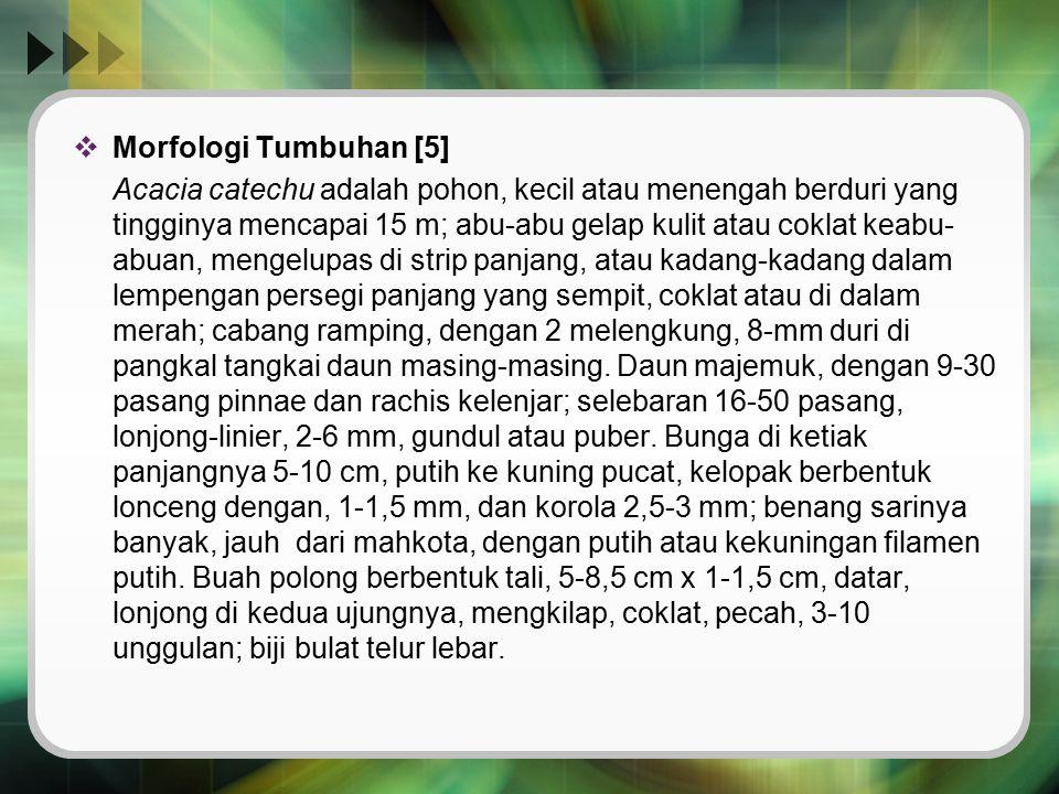 Morfologi Tumbuhan [5]